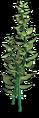 Res algae 8.png