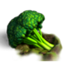Res giant broccoli 1