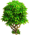 Lemon tree ph2