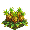 Pineapple plant ph4.png