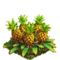 Pineapple plant ph4