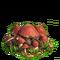 Mushrooms plant ph4
