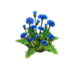 Resource-Cornflowers