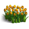Res tulips 3
