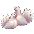 Coll love doves