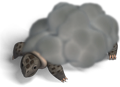 Storm turtle.png
