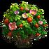 Briar-rose
