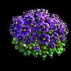 Res violets 3