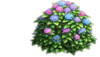 Resource-Hydrangea 1