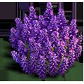 Res lavender bush 2.png