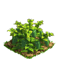 Pepper plant ph3.png