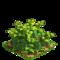 Pepper plant ph3