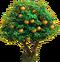 Orange tree ph4