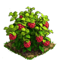 Raspberry plant ph4.png