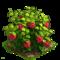 Raspberry plant ph4