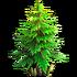 Resource-Small fir
