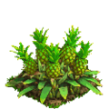 Pineapple plant ph3.png