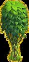 Cocoa tree ph3