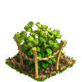 Raspberry plant ph1.png
