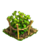 Raspberry plant ph1
