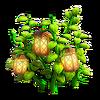 Lanterns plant