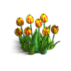 Res tulips 1