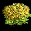 Res mimosa 3