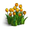 Res tulips 2