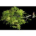 Res broken tree 2.png