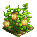 Lanterns plant ph4.png