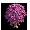 Res bush pink