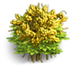 Res mimosa 1