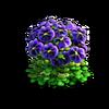 Res violets 2