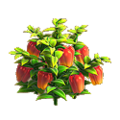 Pepper plant.png