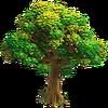 Res oak