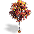 Res birch red 4.png