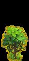 Cocoa tree ph1