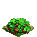 Strawberry plant ph4.png