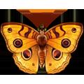 Coll butterflies golden
