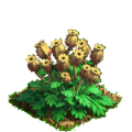 Poppy plant ph4.png