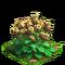 Poppy plant ph4