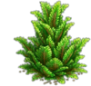 Res juniper 1