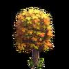 Lesser Maple
