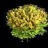Res mimosa 2