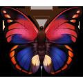 Coll butterflies magenta
