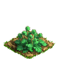 Poppy plant ph1.png