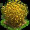 Flax plant ph4