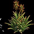 Res aloe vera bush 1.png