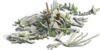 Res skeleton dragon bones