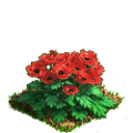 Poppy plant ph3.png